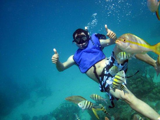 Paradise Island & The Mangroves (Cayo Arena): snorkel