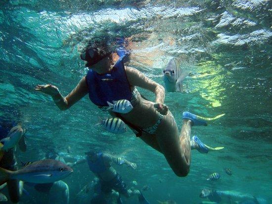Paradise Island & The Mangroves (Cayo Arena): enjoy the paradise