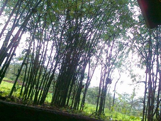Hidden Village: Woods