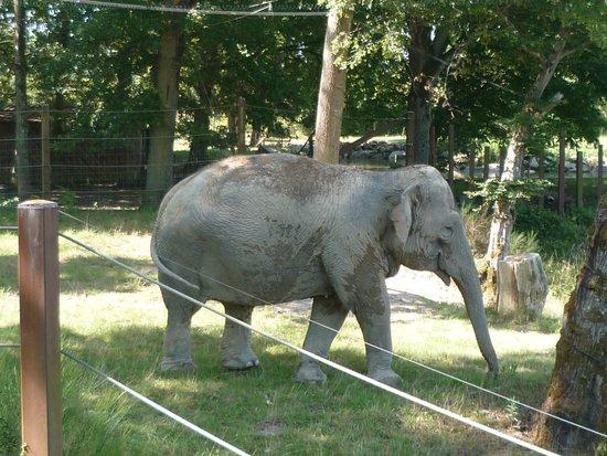 Le PAL : Elephant