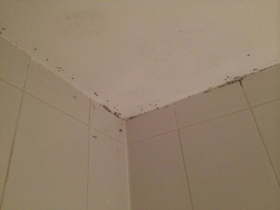 Lismoyne Hotel : Mould in bathroom