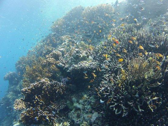 Ocean Dreams Pemuteran: Island of Menjangan