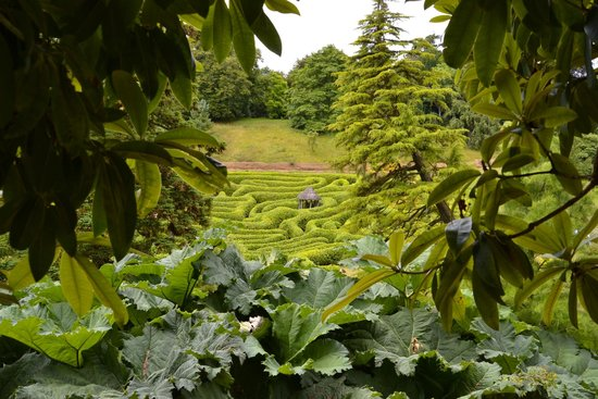 Glendurgan Garden : View of maze from one of the many paths