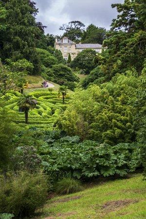 Glendurgan Garden: Another view of Maze