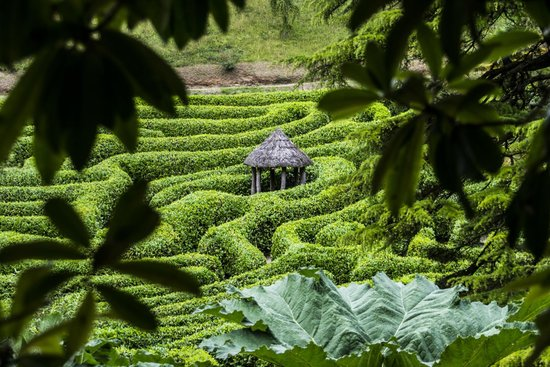 Glendurgan Garden : The Maze
