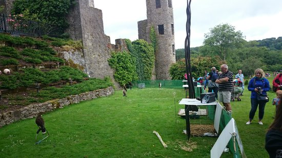About Cork Taxi Tours Day Tours: Falconry at Blarney castle