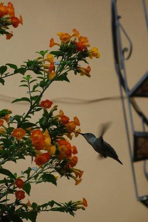 K'uychi Punku Hostal: colibri
