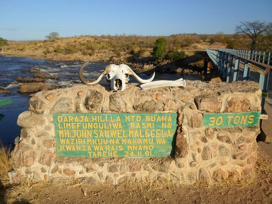 Ruaha National Park: Buffalo skull atop a sign at the bridge