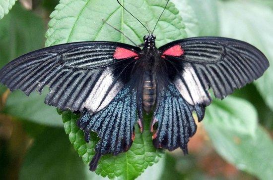 Chateau de Goulaine : La serre aux papillons