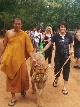 Tiger Temple ( Wat Pa luang Ta Bua) : walking (included)