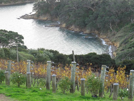 Ananda Tours: beautiful vineyard at Waiheke Island