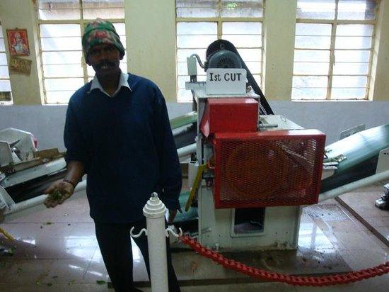 Kannan Devan Tea Museum: Tea making process