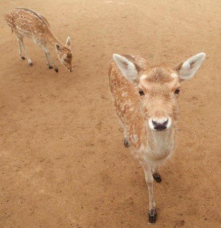 Halls Gap Zoo: So cute!!!