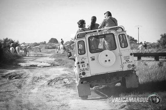 Camargue Sauvage safari 4x4 : échappées sauvage