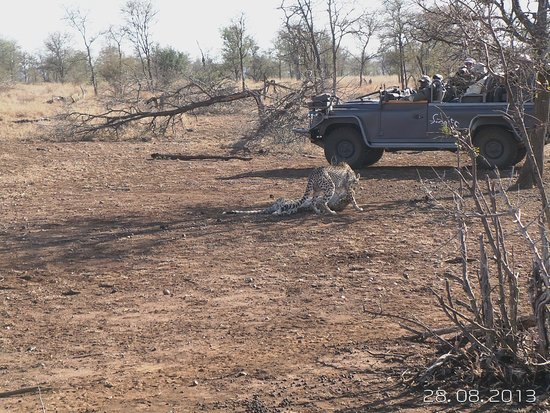 Singita Lebombo Lodge : A leopard checking us out.
