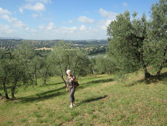 A Casa di Olivo: Les oliviers et la vue sur Florence