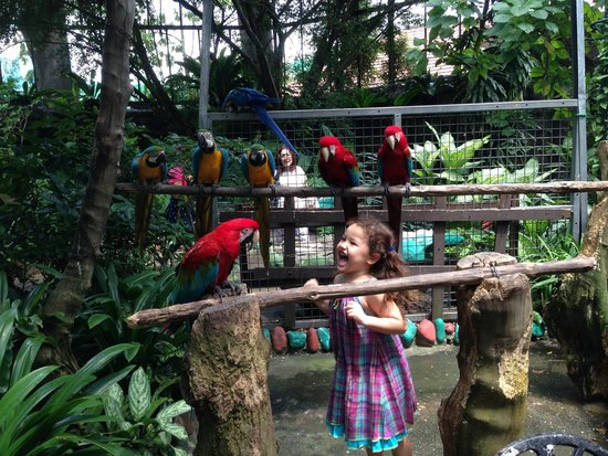 Butterfly Park & Insect Kingdom: very close encounters with the parrots... who recognize my daughter by name at this point