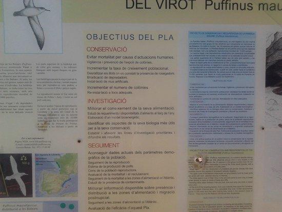 Es Cap de Barbaria Lighthouse: descrizione fauna locale.