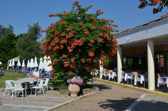 SENTIDO Apollo Palace : restaurant face à la piscine