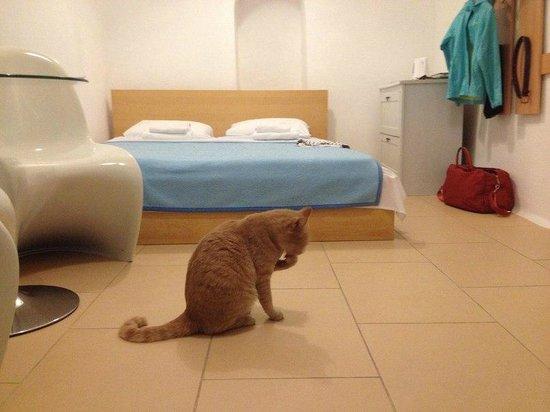 VIP Suites: Вид со входа. Кошки в номере - частые гости