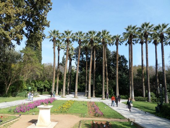 National Garden: Nice palm trees at the entrance of the gardens..