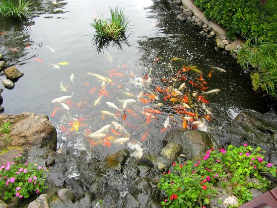 Hotel Botánico & The Oriental Spa Garden: Garden pool with fish and turtles