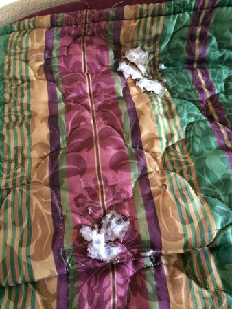 4 A's Inn: Nasty bedspread