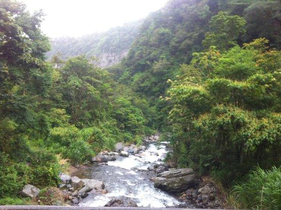 Boquete Mountain Safari Tours: Beginning of Waterfalls hike
