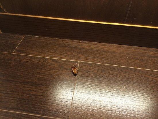 Alcala, Spanyol: Increíble e inadmisible encontrar en un hotel d esta categoría un día hormigas en el mueble bar