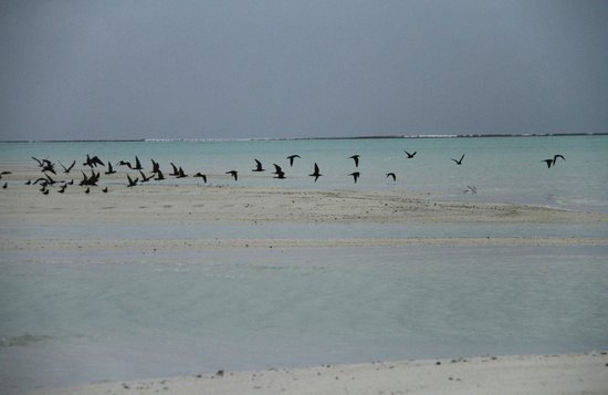 Cocoa Island by COMO: Morning on the sandbank
