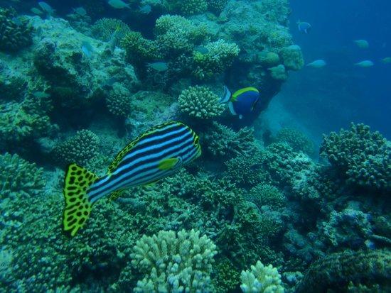 Cocoa Island by COMO : The big aquarium