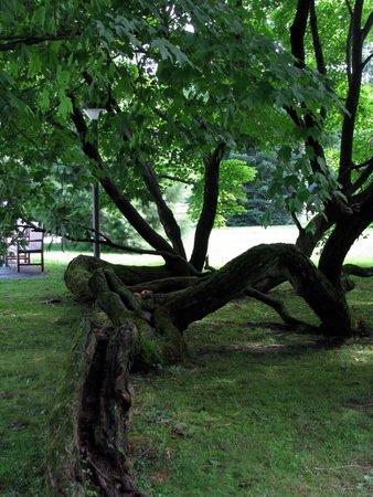 Vanderbilt Mansion National Historic Site : Age Old Trees