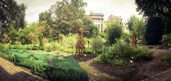 Plantentuin: Little green oasis