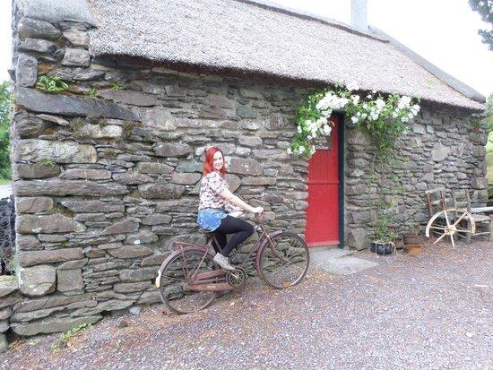 Molly Gallivan's Cottage & Traditional Farm: farm yard