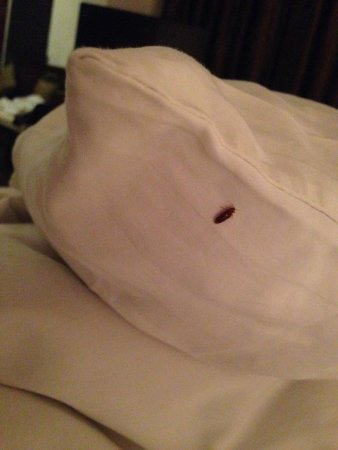 Tennekumbura, ศรีลังกา: Bed bugs