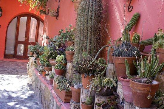 Jard n de cactus en patio exterior picture of for Cactus de exterior