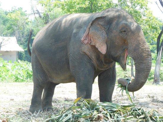 ElephantsWorld: Indruk