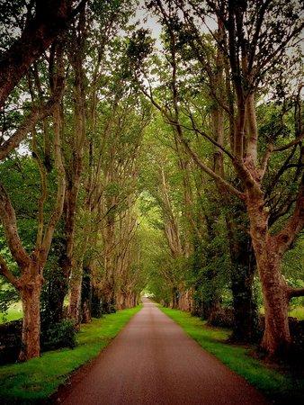 Clachan Farmhouse: The lane to the farm. So lovely.