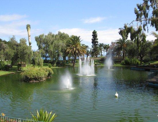Santa Catarina Park : Resident Swan