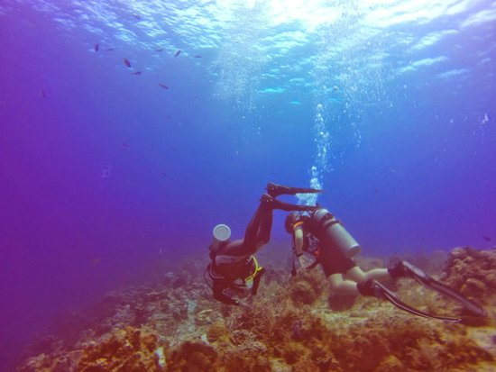 DiveMex : Cozumel diving