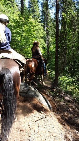 Coffee Creek Ranch: Trail Rides