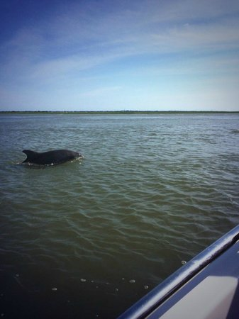 Tidalwave Watersports: Dolphin feeding off the side of the boat