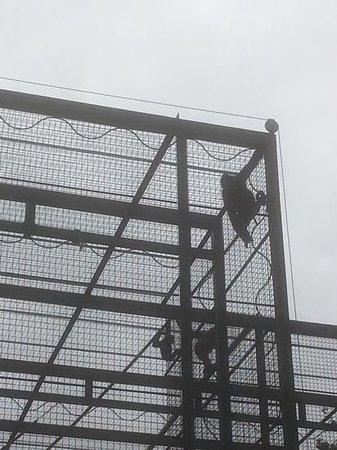 Edinburgh Zoo: climbing