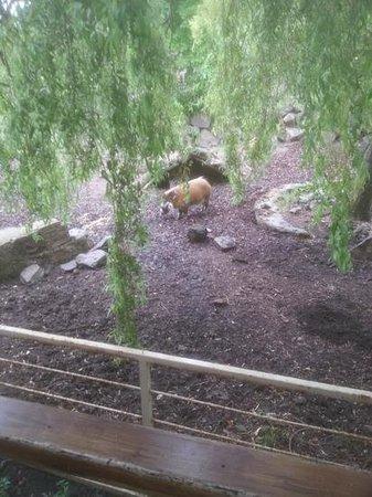 Edinburgh Zoo: more animals