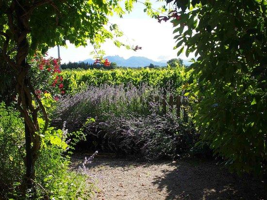 Mas du Clos de l'Escarrat : view on the Dentelles de Montmirail