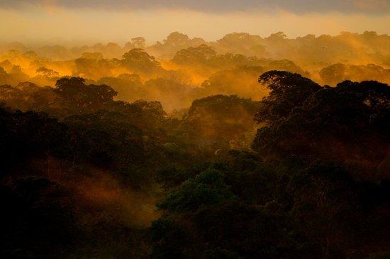 Posada Amazonas: Above the Tree Canopy