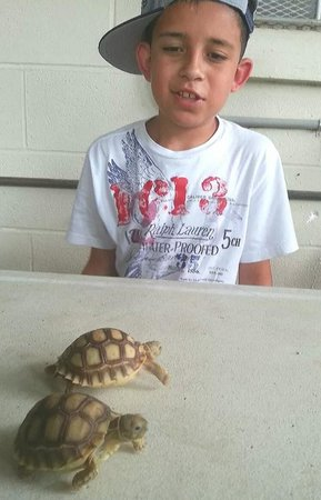 Animal World and Snake Farm Zoo: my son Trae admiring the beautiful baby turtles.