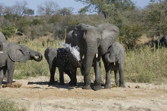 MalaMala Sable Camp: Elephants