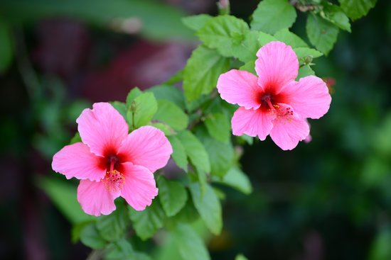 Maui Tradewinds: More flowers