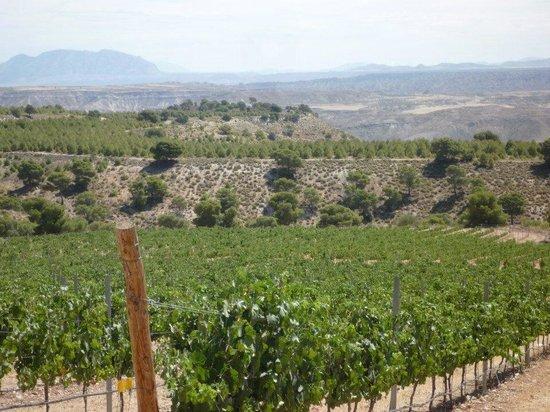 Bodegas Pago de Almaraes: Nuestros viñedos al pie de Sierra Nevada